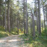 Tot het volgende bosje